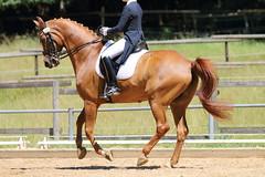 IMG_4670 (dreiwn) Tags: horse pony horseshow pferde pferd equestrian horseback reiten horseriding dressage reitturnier dressur reitsport dressyr dressuur ridingclub ridingarena pferdesport reitplatz reitverein dressurreiten dressurpferd dressurprüfung tamronsp70200f28divcusd jugentturnier