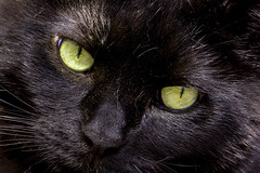 Lovely Lillie (pwendeler) Tags: sonynex7 cat katze chat gato blackcat schwarzekatze lillie face gesicht eye auge tier haustier pet