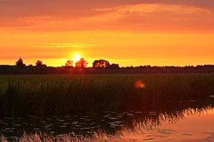 Silent summer sunset (M a u r i c e) Tags: sunset sky sun sunlight water netherlands dutch sunshine cow flare polder
