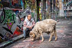 Melbourne Australia (Qicong Lin(Kenta)) Tags: australia melbourne victoria vic people street sheep pet hoiserln color colour coloris d5 city animal