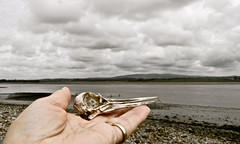 Found (vintage vix - Everything is a miracle) Tags: foundobject oystercatcher skull beak