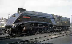 1966 - Polished A4 at the End.. (Robert Gadsdon) Tags: 1966 lner gresley a4 60024 kingfisher lastdays clean railtour steam withdrawn scrapped closedshed