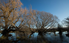 deeper water (keith midson) Tags: trees sky water river ross still flood australia tasmania rossriver