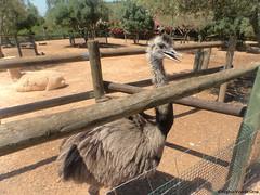 avestruz (Virginia Vicente Orna) Tags: sendaviva avestruz