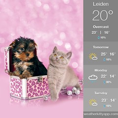 FREE @ weatherkittyapp.com (gill4kleuren - 20 ml views) Tags: cat mouse moments kat pet animal pussycat pussy poezen poes hair eyes little puss jong young katze chat minou mieze gata gato gatta katje gatto kitty kater photo weer weather day kiity cloudy storm wind rain forcast humidity visibility colors yoga bad sky