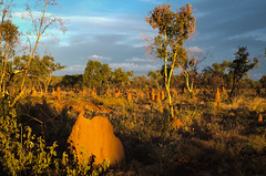 Termite Mounds Northern Territory-10