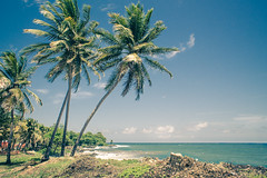 Guadeloupe (Julien Pf) Tags: canon eos 1100d rebel t3 1855mm palmier palmiers arbre arbres mer sea guadeloupe antille antilles ciel sky gwada gwadada 971 ile paysage paysages landscape landscapes outremer