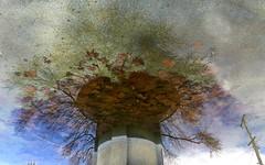 Upside down world (giacsfotografia) Tags: perspective cloud water reverse upsidedown reflections