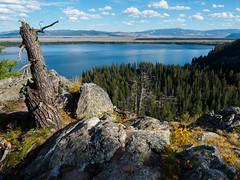 Lake lookout. (Ethan Cheng) Tags: trees grandtetonnationalpark lake sky forest wyoming grandtetonnp