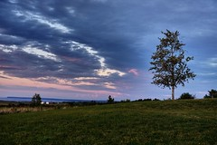 Lone tree (halifaxlight) Tags: canada novascotia annapolisvalley grandpre bayoffundy sunset tree dykelands barns blue pink