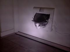 20161019-105128-i-1 (Catflap central) Tags: cat catdoor katzenklappe raspberry pi camera cats catflap kattenluik catflapj2nnl pet meow