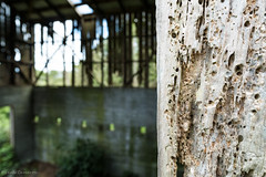 Holes (leah-nz) Tags: rural farm barn shed borer decay broken derelict deathwatch beetle unused holes