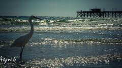 Brid & Pier (fgm runs) Tags: beach pier remington florida bird surf sunset