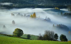 roling fog (ekveronica) Tags: fog cloud mist morning farm field nature norway beitostlen country trees colours mood white landscape