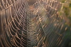 LWW (little world web) (Xtraphoto) Tags: web spinnennetz spiderweb natur nature bokeh unschrfe