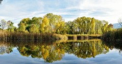 Early Autumn in the park 2016_10_13-th_Panorama_#1 (Me now0) Tags: autumn afternoon lake park trees reflection rush yellowleaves nikond5300 basiclens 1855mmf3556 panorama          5300