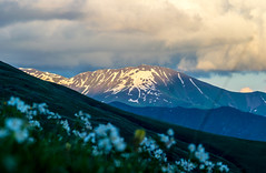 Snowy hill (oleksandr.mazur) Tags: above alpine altitude caucasus cliff cloud cloudscape crag day dusk evening flowers fluffy freedom georgia glacier grass high hill ice icecap landscape light mountain nature outdoor peaceful peak range relax ridge rock scenic sky slope snow snowy summer summit sun sunlight sunny sunset sunshine top tourism travel vacation view wall wide