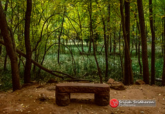 Is this a backdrop? (srijish) Tags: nikon d5200 zion national park utah sigma 18250 ut