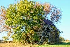 "'Falling Down"" Fall Foto (chumlee10) Tags: il illinois fall fallingdown barn leaves tree bush sky blue oglecounty"