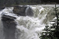 Thundering Over the Edge (Patricia Henschen) Tags: jaspernationalpark athabascafalls athabasca river waterfall rapids jasper canada parkscanada parcscanada parcs parks northern rockies mountains rocky pacific northwest alberta icefieldsparkway