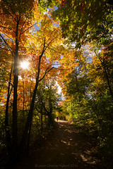 full fall spectrum (LASCAR35) Tags: joana automne couleurs fall feuilles ilebizard