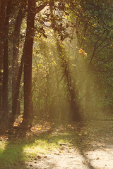 A walk in a hazy mist (Wim van Bezouw) Tags: mist forrest trees green leaves light sun sunlight sony ilce7m2