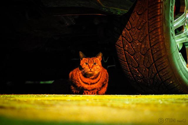 Today's Cat@2014-12-06