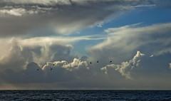 Heading north (Anders_3) Tags: ocean winter sky norway clouds norge seagull january northsea jren rogaland h kvassheim nikond700