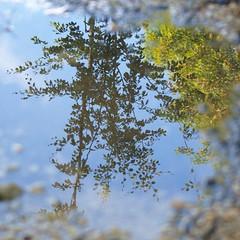 Mondes parallèles * (Titole) Tags: sky reflection puddle squareformat flaque friendlychallenges titole nicolefaton