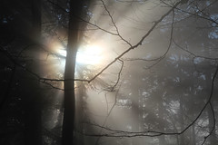 let the sun shine  (cyberjani) Tags: sunset nature forest slovenia rakitna