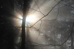 let the sun shine ✿ (cyberjani) Tags: sunset nature forest slovenia rakitna