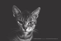 Tokina 100mm macro 6/365 (J. Southard Photography) Tags: bw cat nikon kitty 100mm tokina d610