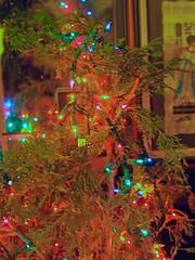 PC072611 Christmas tree 20131207 (caligula1995) Tags: lights christmastree 2013