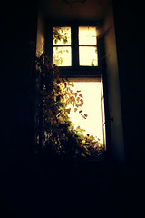 Invasion (Ancien Hpital de S) (stefaniebst) Tags: old light shadow france abandoned window backlight hospital lumire ombre explore abandon forgotten former fentre invasion contrejour sud ancien urbex oubli abandonn hpital