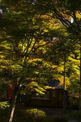 京都 高雄 / Takao, Kyoto (kimtetsu) Tags: autumn tree fall japan kyoto autumnleaves 京都 日本 紅葉 秋 木 京都市 京都府