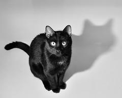 Untitled (gootyeriz) Tags: cat bath bare flash tub offcameraflash nikond90