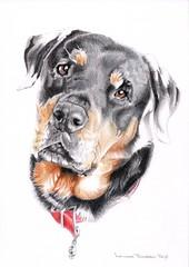 Tess (Louise Dodds) Tags: portrait pet art dogs artist drawing rottweiler gift