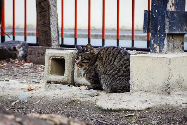 Today's Cat@2014-12-31