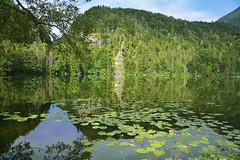 Somewhere in Austria (Mario Iturri M.) Tags: trees salzburg green hoja water austria nikon lakes reflect reflejo d7100