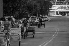 Caravan (Steven.O'Toole) Tags: street bw white black bike canon football carriage fsu bicycles notre dame 70d 18135mm