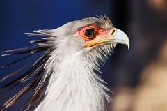 _IGP5535 (natsuki90) Tags: bird  20150211