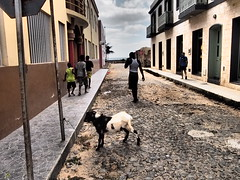 A goat was placed outside the hypermarked in the center of Sal, Boa Vista!