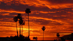 West Coast Wonder (OffdaLipp) Tags: ocean leica sunset orange clouds panasonic palmtrees pointdume westcoast 16x9 santamonicabay offdalipp