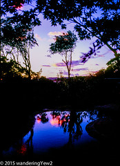 Costa Rica: Monteverde Lodge Sunset #2 (wanderingYew2) Tags: sunset reflection 120 mamiya film mediumformat geotagged costarica swimmingpool monteverde filmscan mamiya7ii wildernesstraveltour geo:lat=1031322 geo:lon=84823661