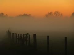 Foggy Fence Friday..x (lisa@lethen) Tags: weather fence foggy friday