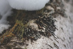 Micro Moss (TrentNiekerk) Tags: life wood winter wild white cold tree green nature sign last cool woods hike adventure explore wilderness hardy