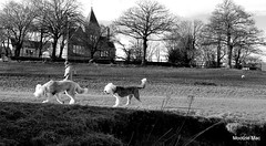 Doggy Strolling (mootzie) Tags: trees dogs walking riverside gorgeous fluffy aberdeen owner collars