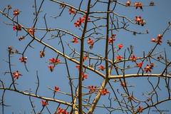 Spring (Sougata2013) Tags: india mountain flower nature colors spring nikon hill mandi himachalpradesh nikond3200 kamand