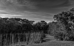 Home (littletinperson) Tags: trees sky blackandwhite bw home water monochrome landscape florida explore impression d800 explored nikond800 littletinperson