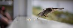 Bird (paul.wienerroither) Tags: bird nature birds animal canon photography 50mm catch timing 5dmk3